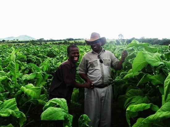 El productor agrícola Kindness Paradza (derecha) con uno de sus empleados: Stanley Kwenda/IPS
