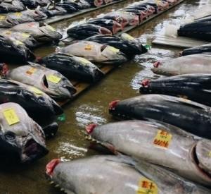 Imagen de Greenpeace sobre la pesca de atún rojo