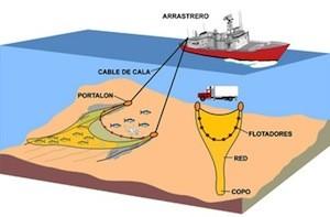 Ilustración sobre la pesca de arrastre de Oceana