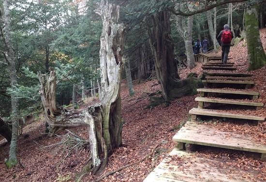 Tosande-escaleras-fila