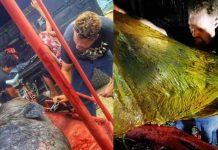Darrell Blatchley ha hecho públicas estas fotografías de la autopsia cetáceo fallecido por ingerir plásticos