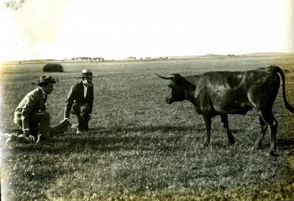 Alfonso XIII toreando con Joselito el Gallo