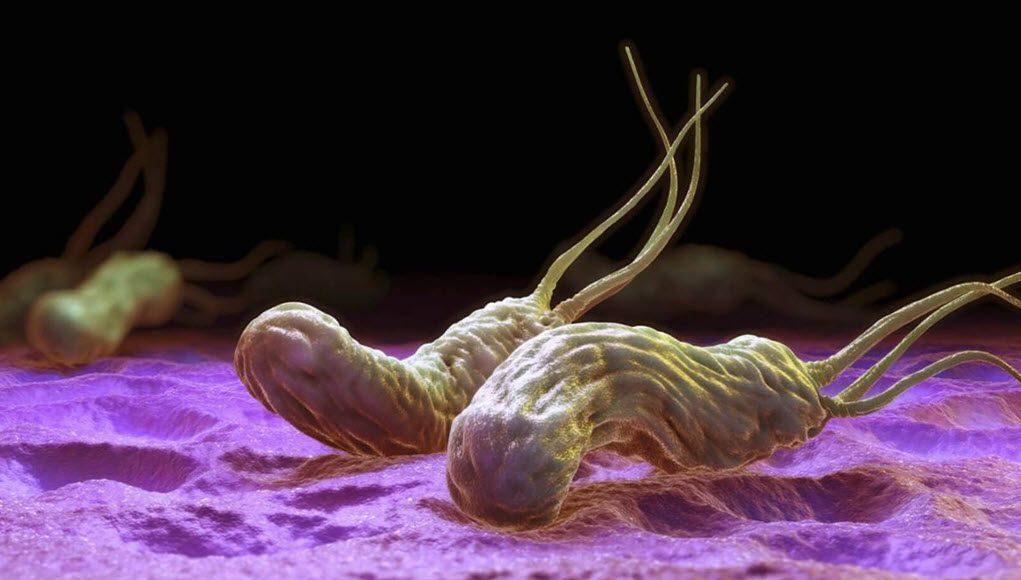 Helicobacter Pylorí Algo Más Que Una Bacteria Periodistas En Español