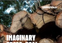 Greenpeace maderas amazonia