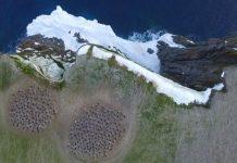 Imágenes de colonias de pingüinos obtenidas por el Landsat