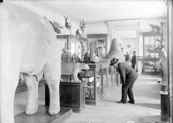 Armando Escaín-Muñoz: Esta foto es del Departamento de Historia Natural, cuando las colecciones todavía estaban en el Museo Nacional, en la calle de Moneda.