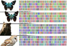 codigo de barras genetico