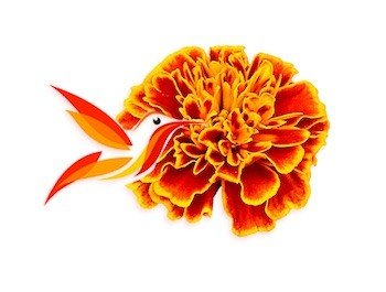 colibríes y flores de Cempasúchil