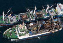 Greenpeace. barcos de pesca detectados cuando procedían al transbordo de peces