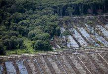 Desmonte de turbera por aceite de palma. Las excavadoras desmontan turberas intactas y construyen canales