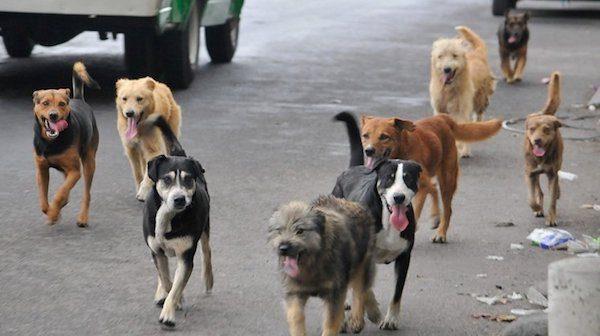 Perros abandonados en las calles de Catamarca