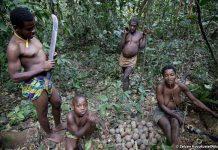 Tribus 'pigmeas' como la de los bakas han vivido en las selvas de la cuenca del Congo durante milenios. Están siendo expulsados ilegalmente en nombre de la conservación, pero la actividad maderera, la caza furtiva y otras amenazas para especies en peligro de extinción, como el gorila, el elefante de selva africano o los pangolines, continúan. © Selcen Kucukustel/Atlas