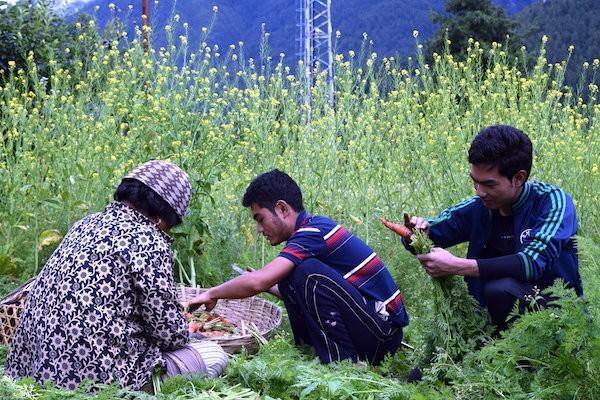 Tsering Dorji trabaja en su granja en el pueblo de Satsam, en Bután. Crédito: Stella Paul / IPS