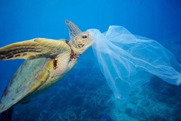 Greenpeace, tortuga afectada por una bolsa de plástico